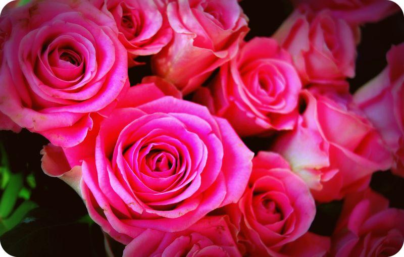 Flors mire 3